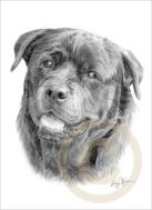 158960771_dog-rottweiler-le-art-pencil-drawing-print-a4-signed-by-