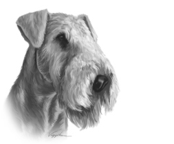 AIREDALE TERRIER..