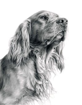 Anticipation_Spaniel_Drawing_by_Laura_Hardie_at_Stockbridge_Gallery_Dogs_in_Art__47847.1408375155.1280.1280