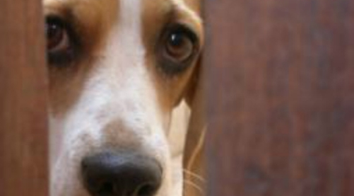 dog-by-cameron-bennett-article-image-x2