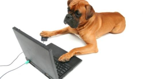 dogpc