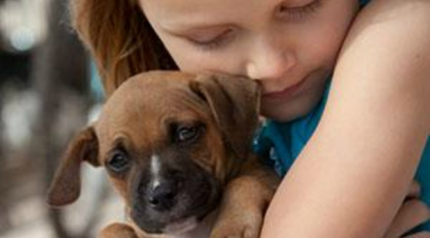 domestic-violence-and-animal-cruelty