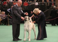2013-09-11-09-51-39-A1-5cC-dog-show