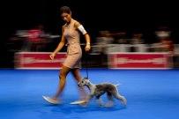 DogShow-2